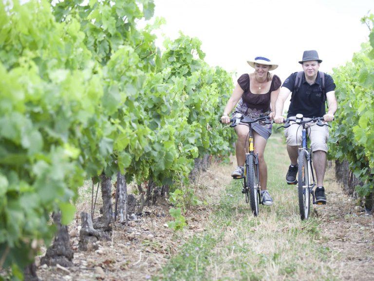 Balade en vélo dans les vignes